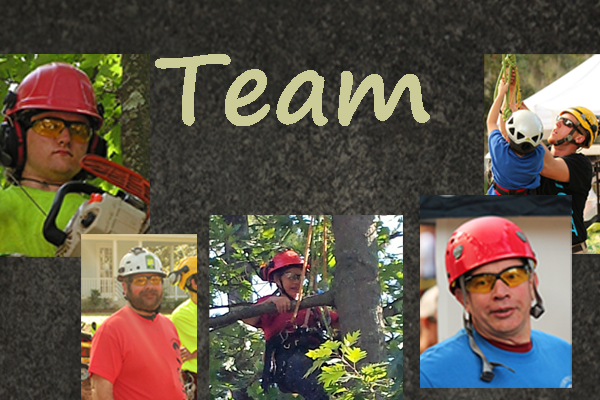 Trees Vermont Team:  Experts in Trimming, Removal and More!